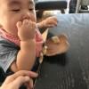 0歳9ヶ月〜赤ちゃんの手づかみ食べ事情と鉄板レシピ
