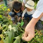 わが家の食育〜秋の収穫体験〜